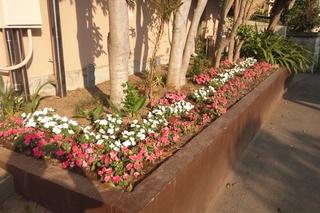 緑保育園花壇1.JPG