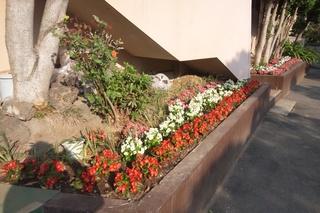 緑保育園花壇2.JPG